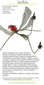 fata libellula
