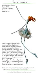 fior di carota